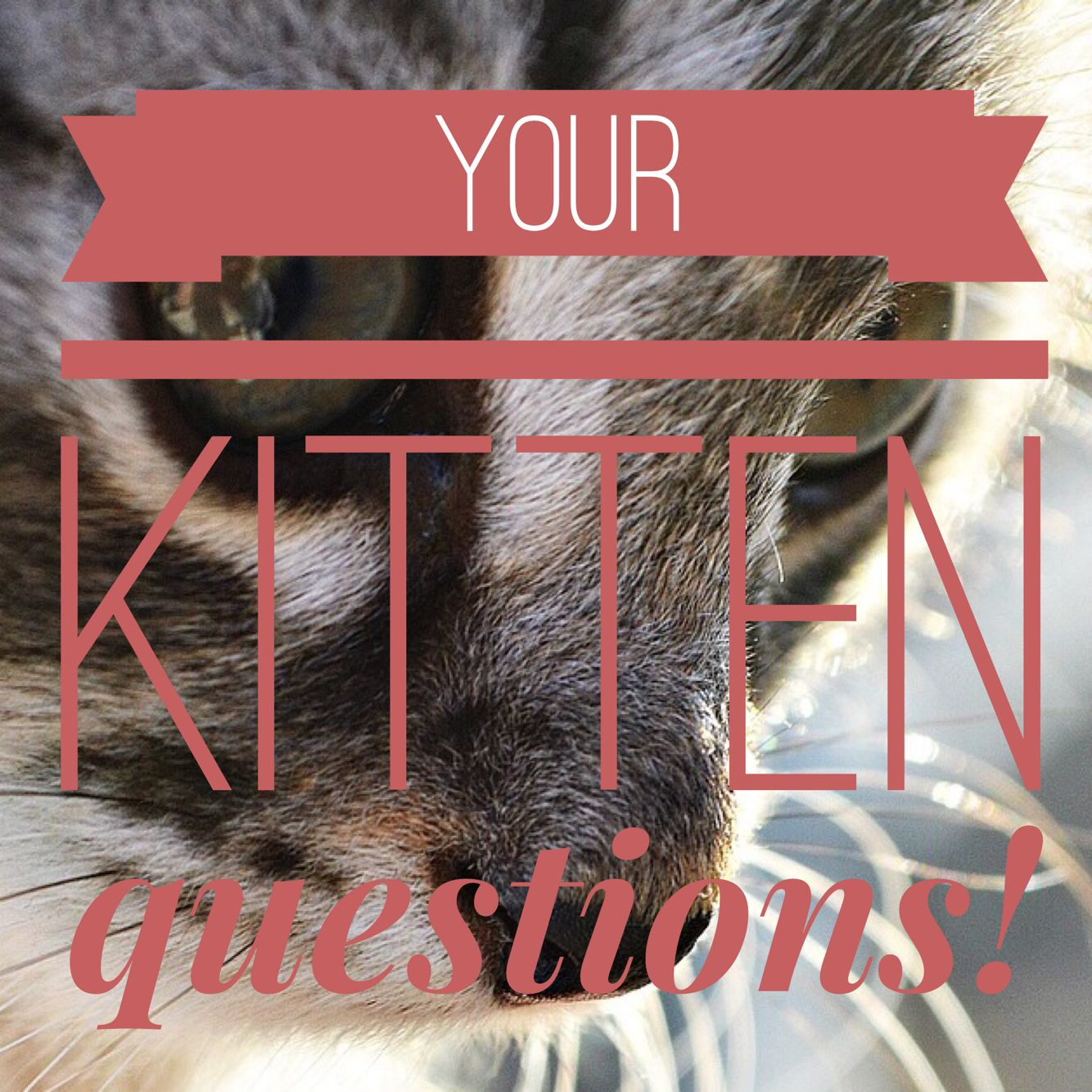 Feeding toileting training kittens and how to stop