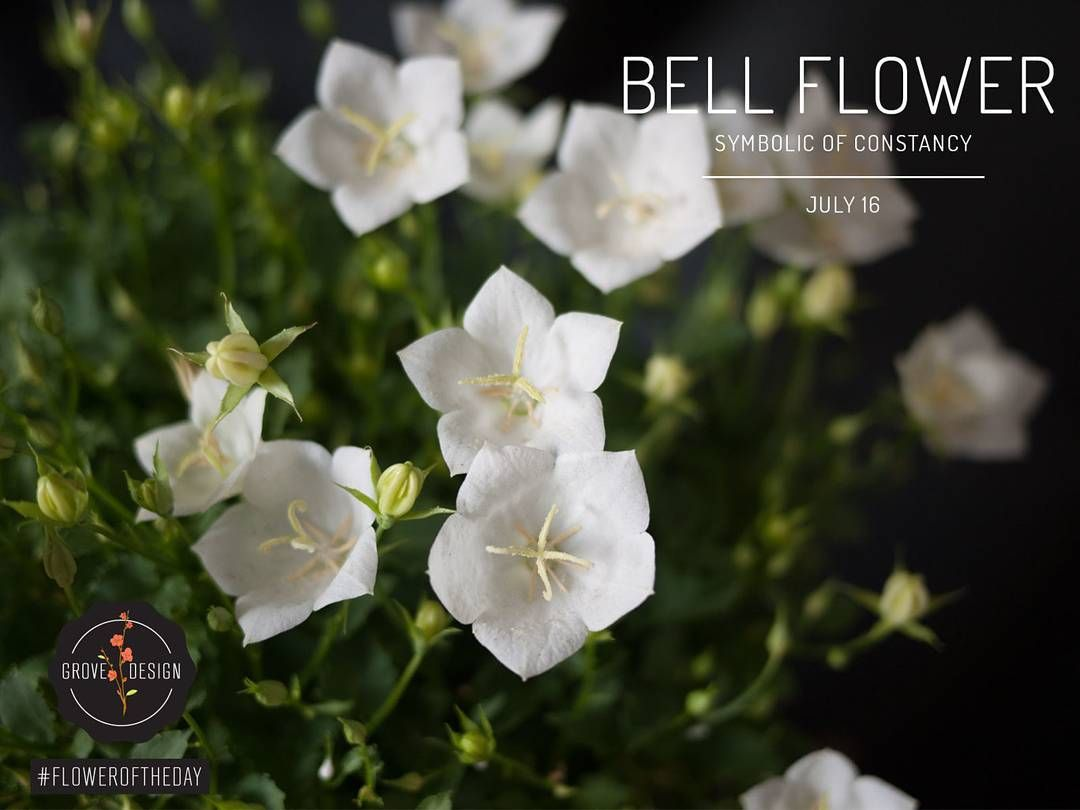 The Language Of Flowers Grovedesign Bellflower Languageofflowers Language Of Flowers Garden Services Flowers
