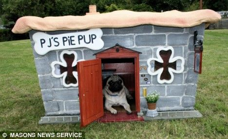 Pictured Mozart The Pug Who Lives In His Very Own Pie Shaped Pub