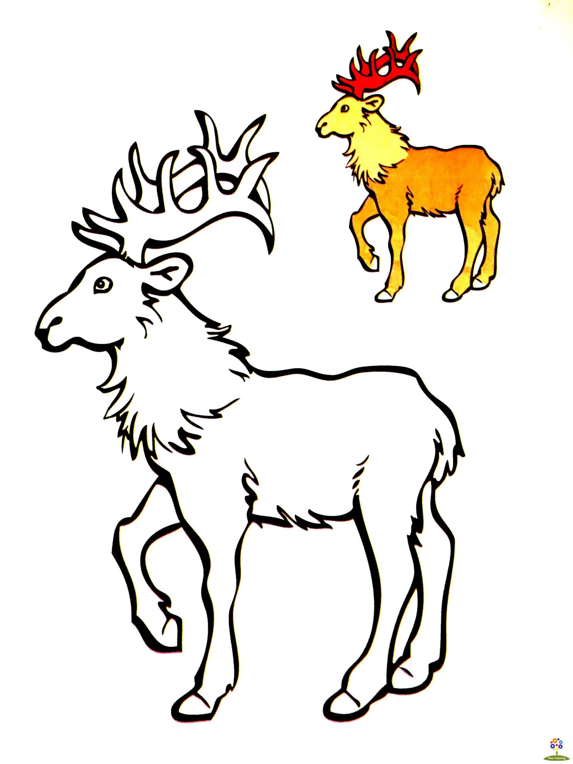 7 Zoo Animals Worksheets For Kindergarten Cute Zooal Coloring Pages Free Printable Sheets For Zoo Animal Coloring Pages Zoo Animals Animal Coloring Pages [ 2560 x 1920 Pixel ]
