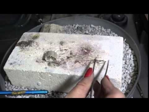 The swing arm bender youtube diy and crafts pinterest in this tutorial joni will be showing you how to make ring bands with pancake dies ccuart Choice Image