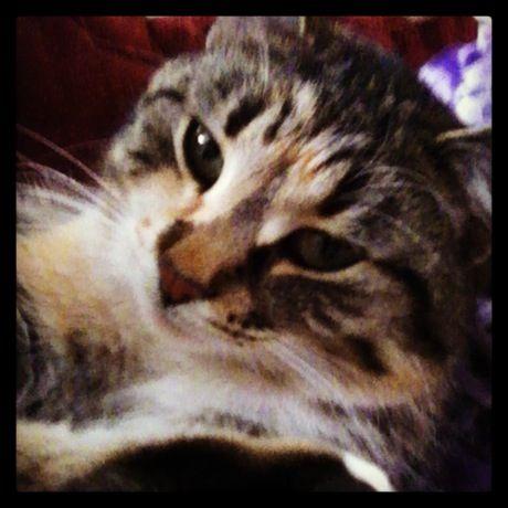 My kitty Silver. She's so cute