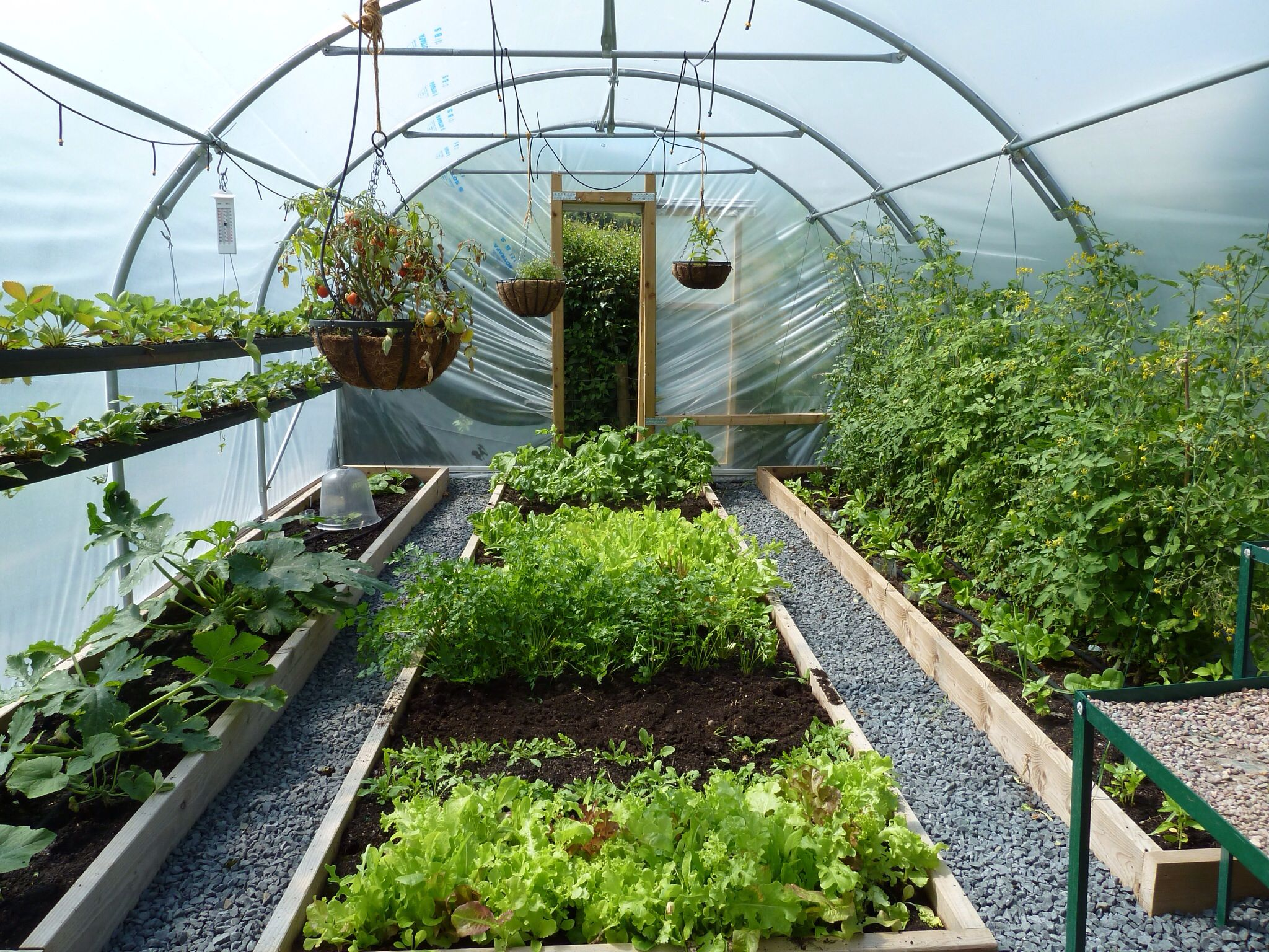 the polytunnel is producing all the fruit and veg we can eat 2020