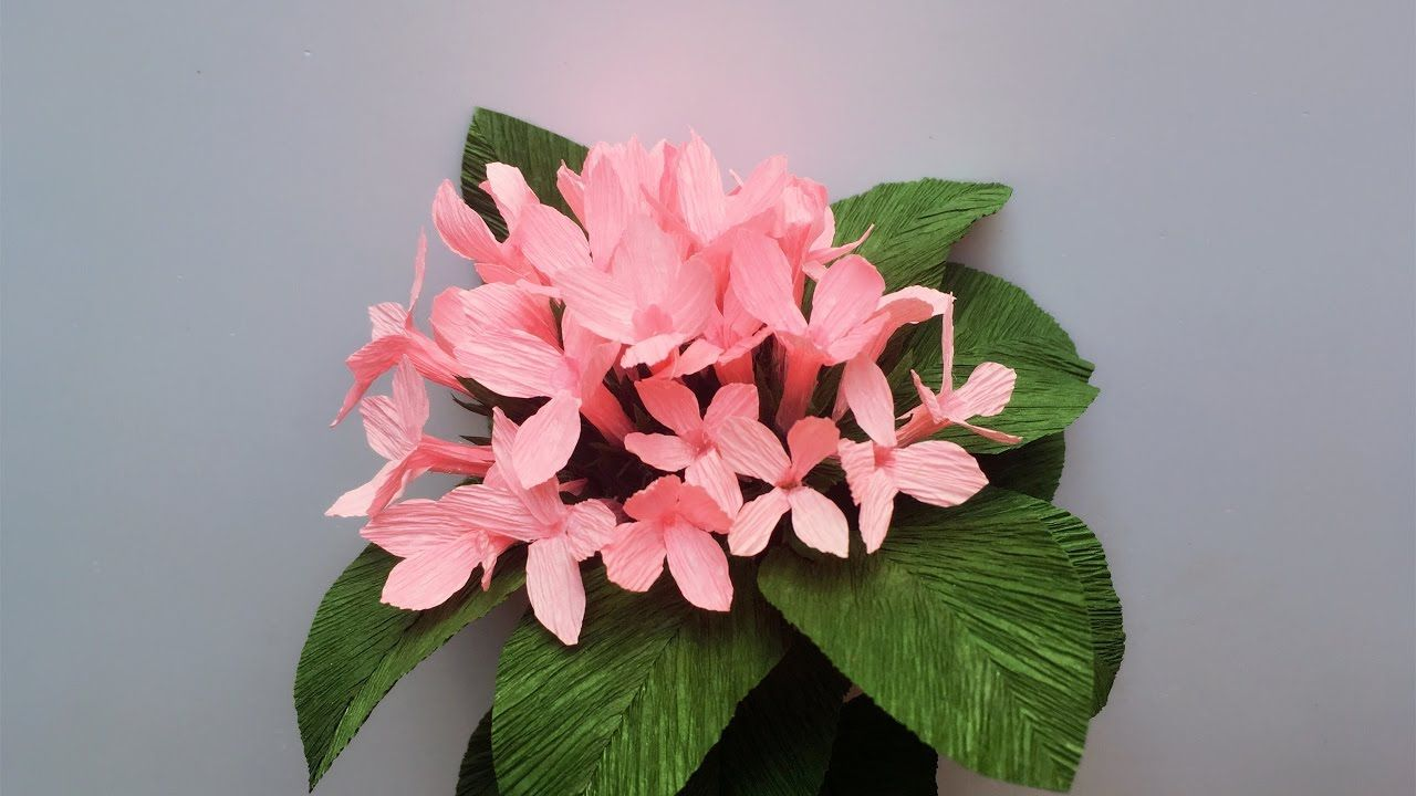Abc Tv How To Make Bouvardia Paper Flowers From Crepe Paper