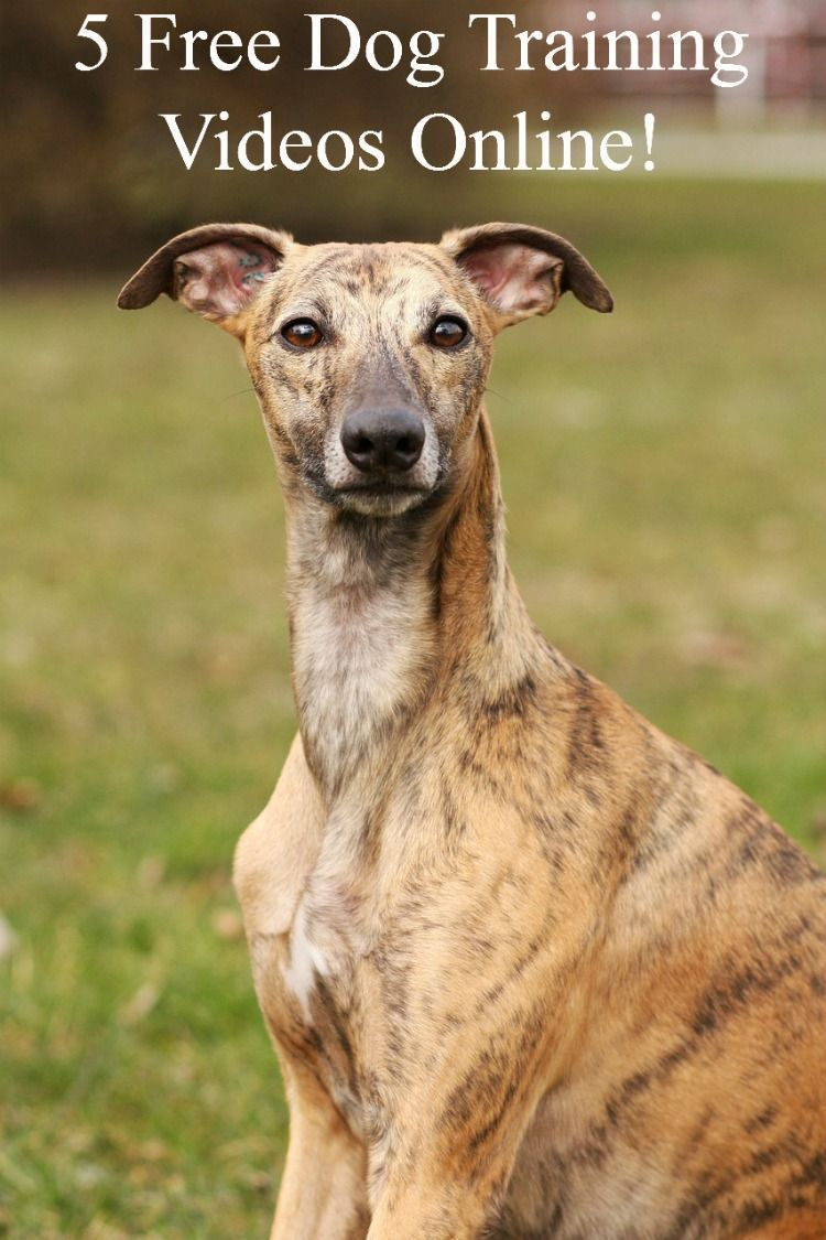 5 Powerful Dog Training Videos Free Online Dog training