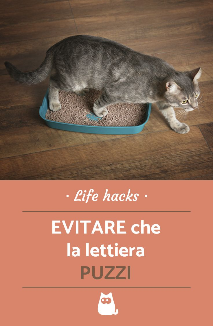 Costruire Lettiera Per Gatti come evitare che la lettiera puzzi (con immagini) | casetta
