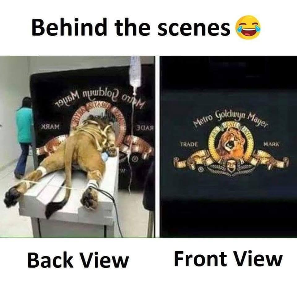 This Is The Truth Beautiful Love Photooftheday This Is The Truth Beautiful Love Phot Funny Mems Lion Memes Funny