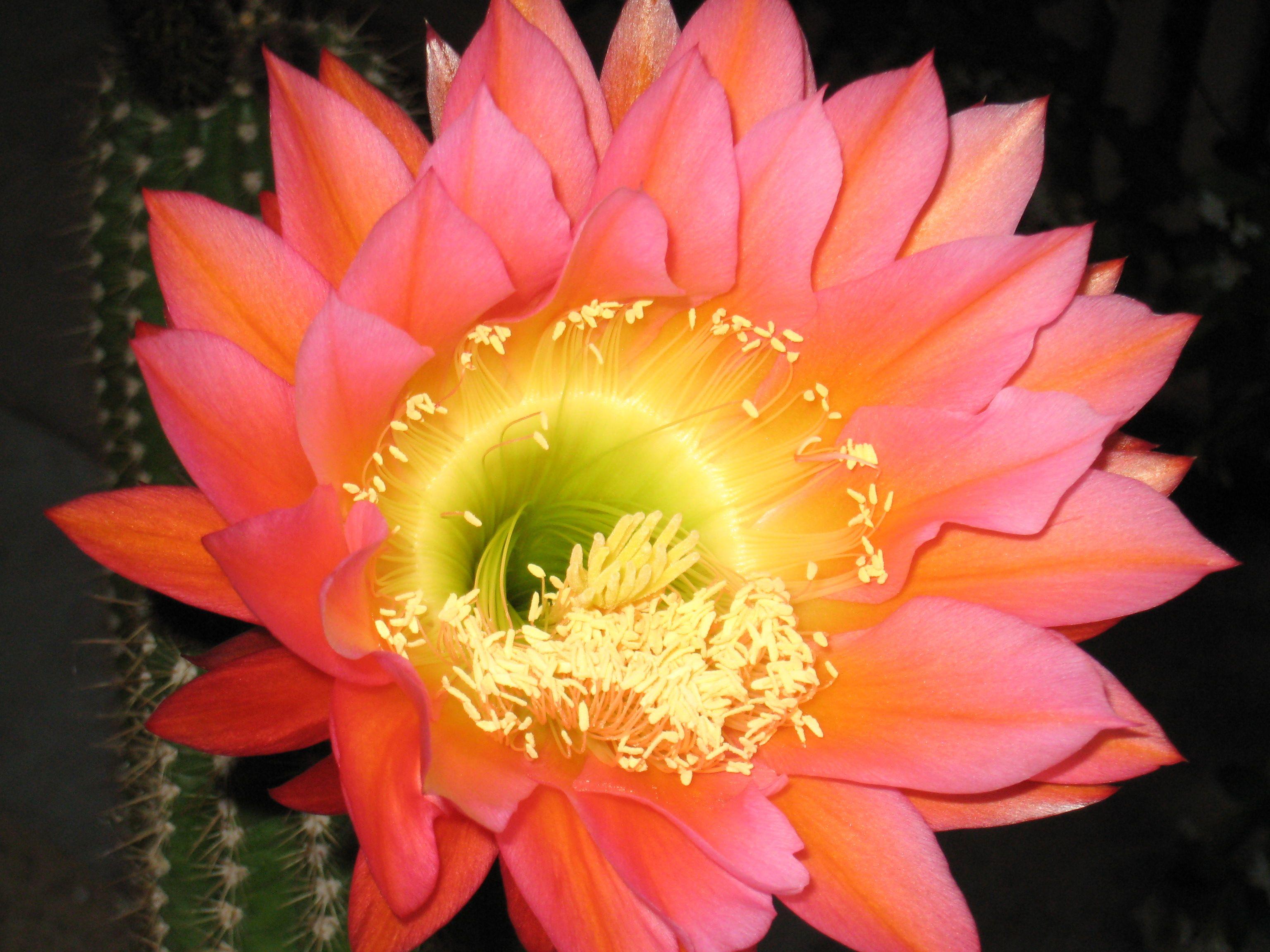Our Cactus