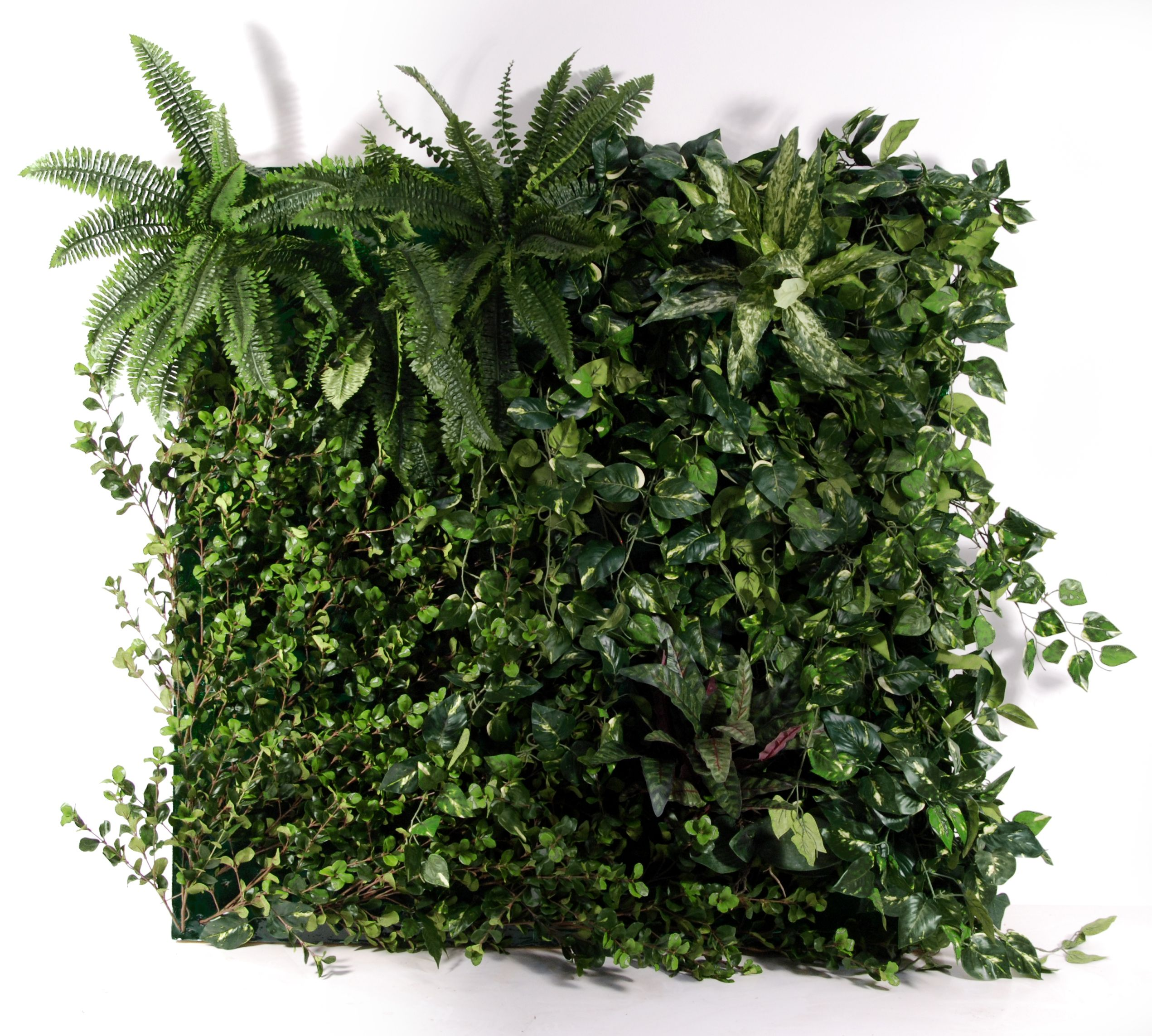 Green wall systems area to mask wall expanses using for Wall plants outdoor