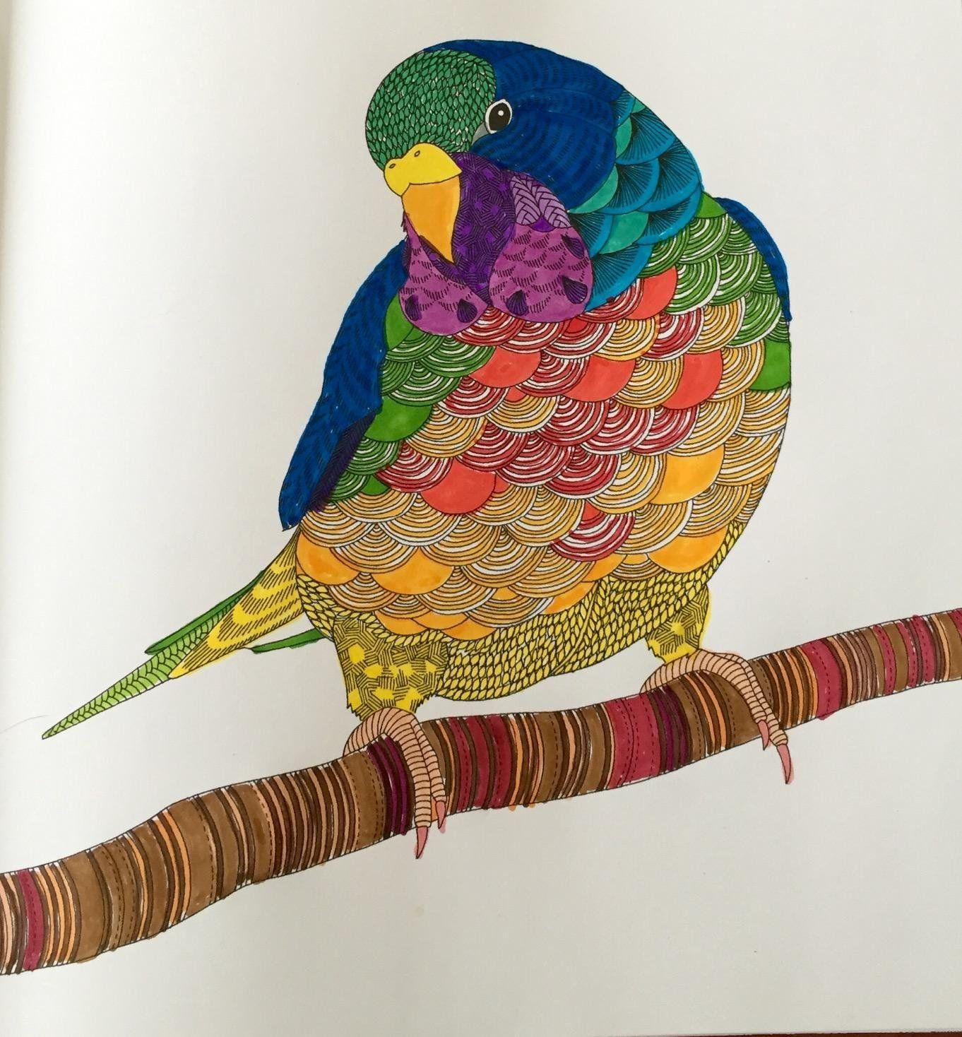 Color me draw me animal kingdom book - Amazon Com Animal Kingdom Color Me Draw Me A Millie Marotta