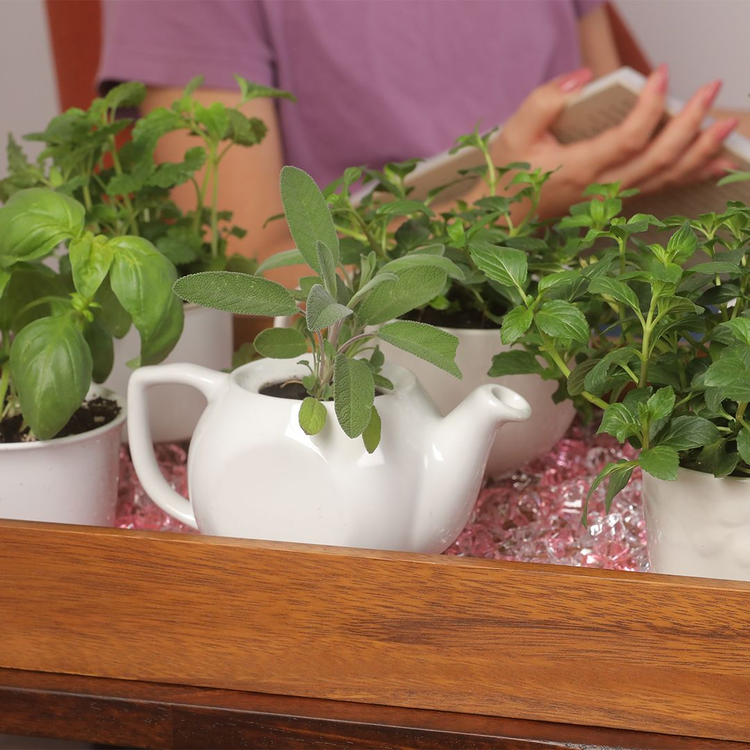 Mood Boosting Garden With Images Growing Food Indoors