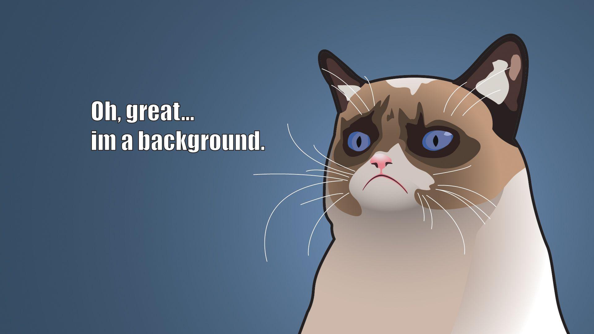 Grumpy Cat Wallpaper Grumpy Cat Meme Grumpy Cat Cartoon Grumpy Cat Humor