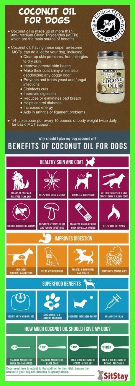 Photo of Kokosöl hat einige Vorteile für Ihren Hund. #Shampoo #Itchy #Skin #Coconut #Be…
