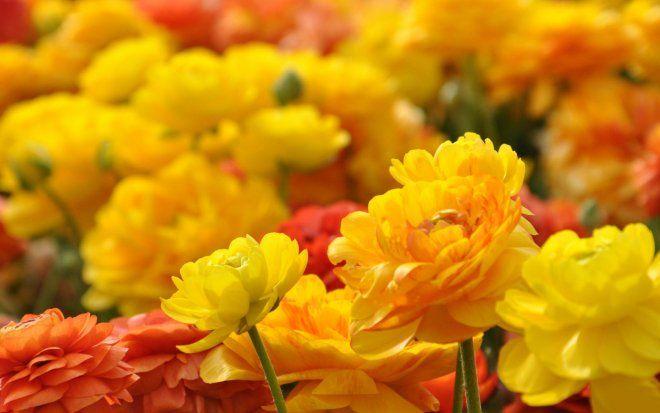 40 Beautiful Flower Wallpapers For Your Desktop Mobile And Tablet Hd Wallpapers Beautiful Flowers Wallpapers Yellow Flower Wallpaper Beautiful Flowers Hd Wallpapers Fantastic yellow flower hd wallpaper