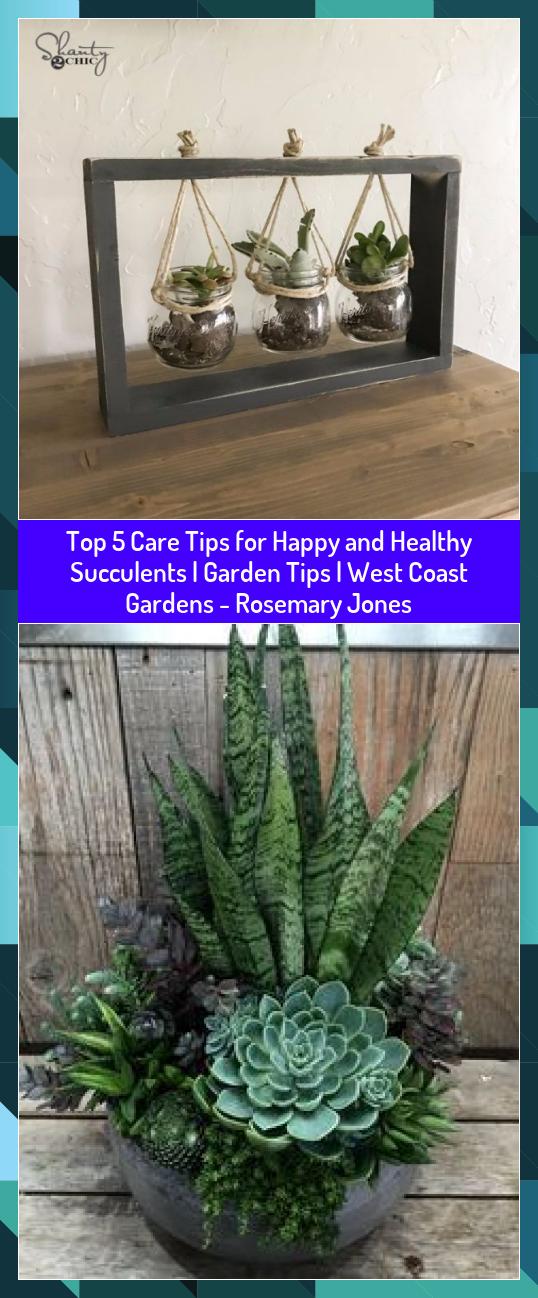 Top 5 Care Tips for Happy and Healthy Succulents  Garden Tips  West Coast Gardens  Rosemary Jones