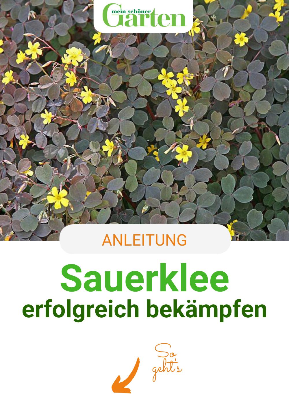 Sauerklee Im Garten Erfolgreich Bekampfen Outdoor Gardens Perfect Garden Amazing Gardens