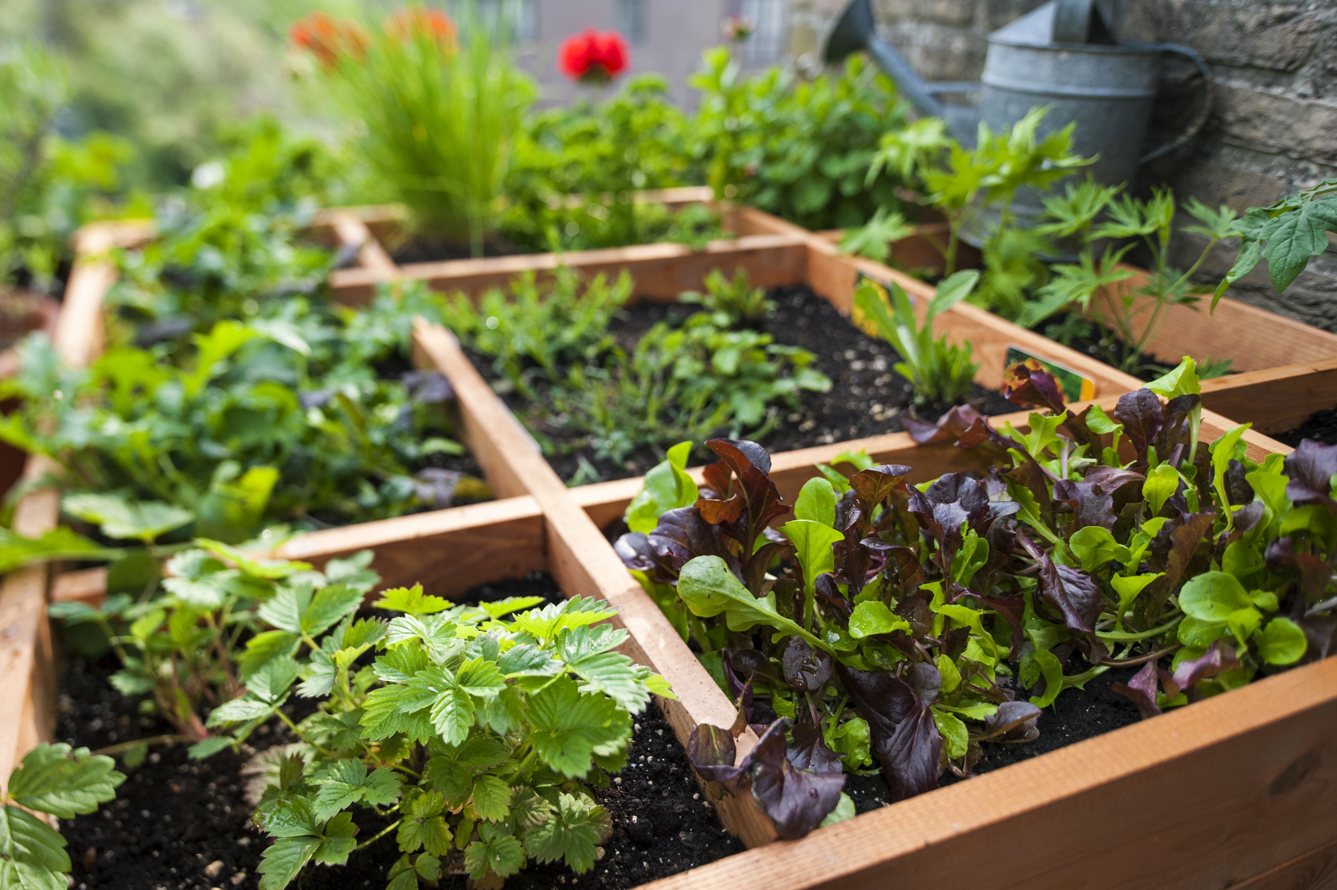 Garden Plants Vegetable Square Foot Gardening By Planting Flowers ...