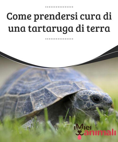 come prendersi cura di una tartaruga di terra animali