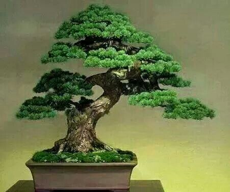 Dancing Bonsai... Delicate & Serene Beauty