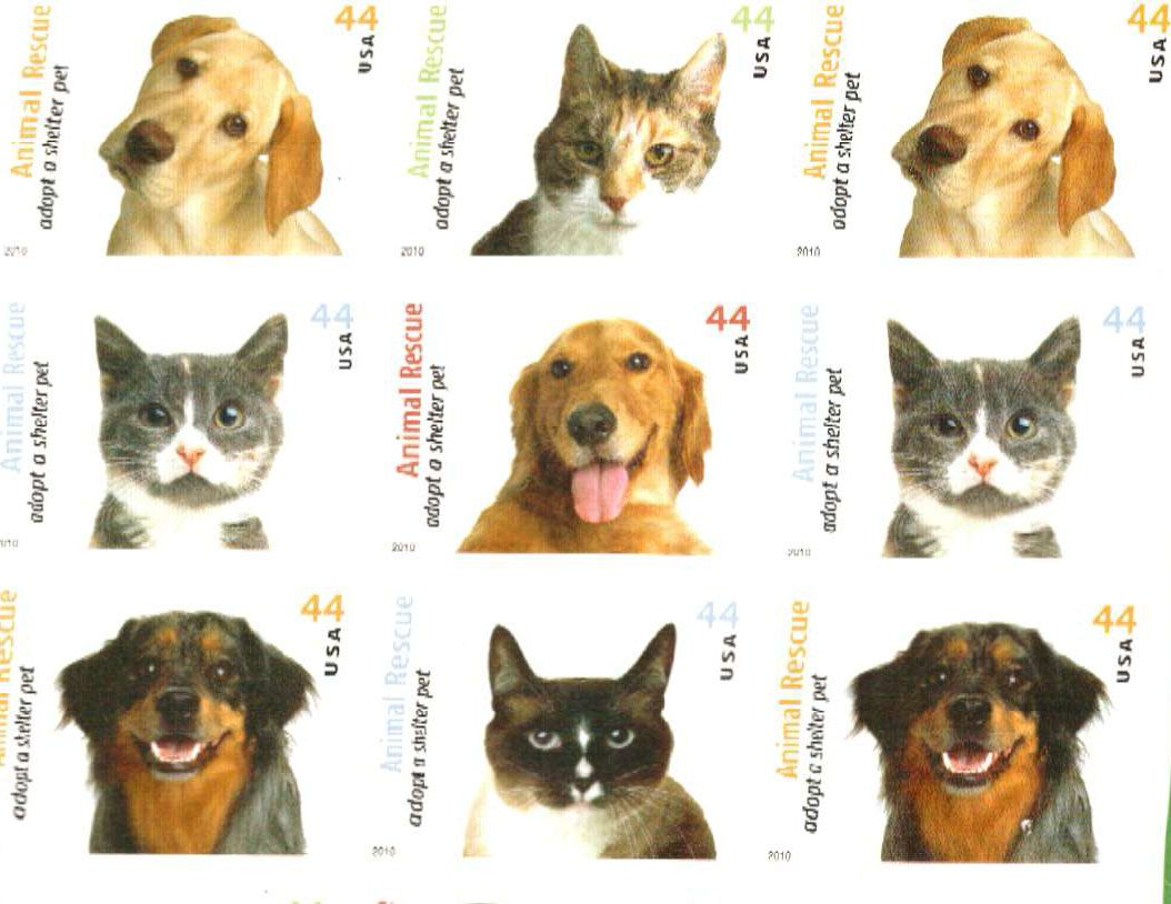 Dog And Cats Postage Stamps In Real Life Dog Cat Dogs Stamp