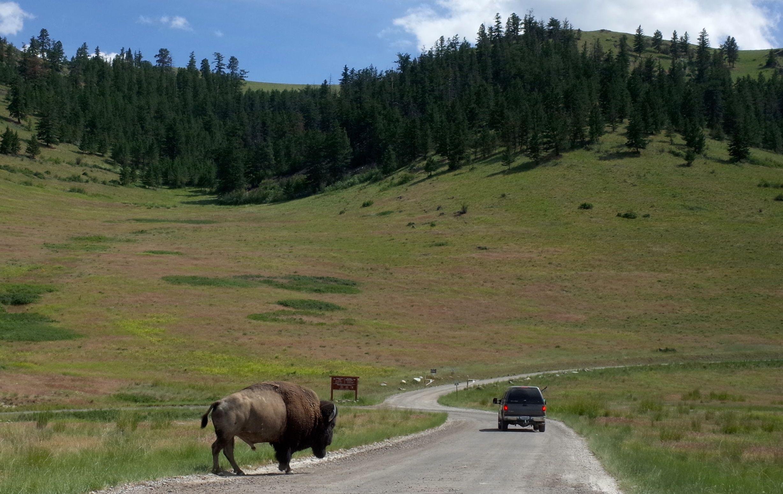 National bison range montana montana country roads