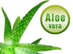 Aloe vera: Jak ji pěstovat? Její pozitivní vliv na zdraví
