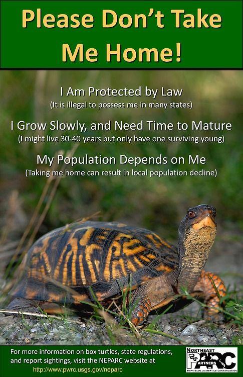 Save The Turtles Wildlife Facts Box Turtle Pet Turtle