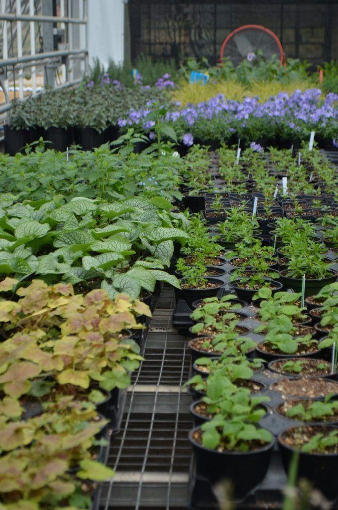Spring PlantFest at Plants, Botanical gardens, Garden