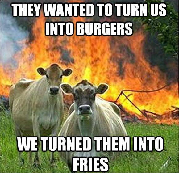I think I find these as funny as I do because these two cows look so stupid.