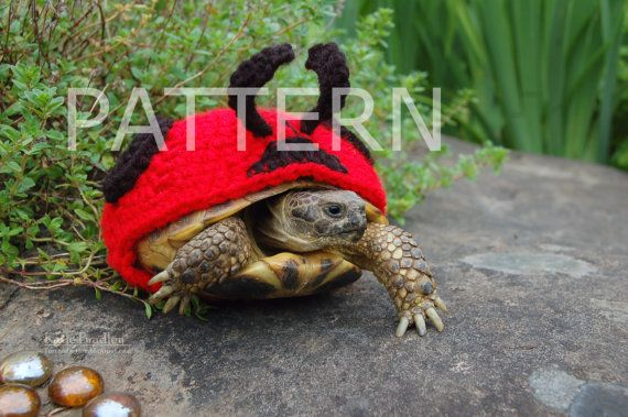 New Crochet Pattern Instructions For Ladybug Cozy For Tortoises