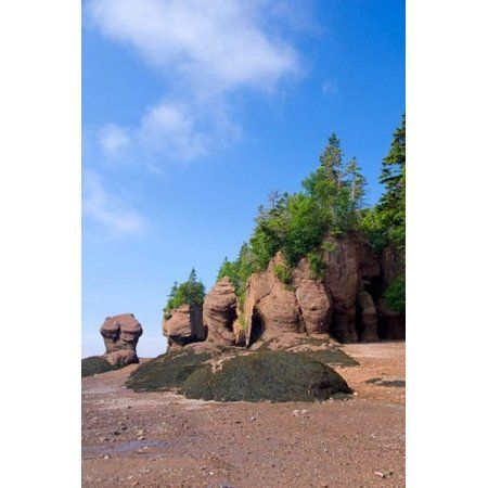 Bay of Fundy Hopewell Rocks Canvas Art - Cindy Miller Hopkins DanitaDelimont (24 x 36)