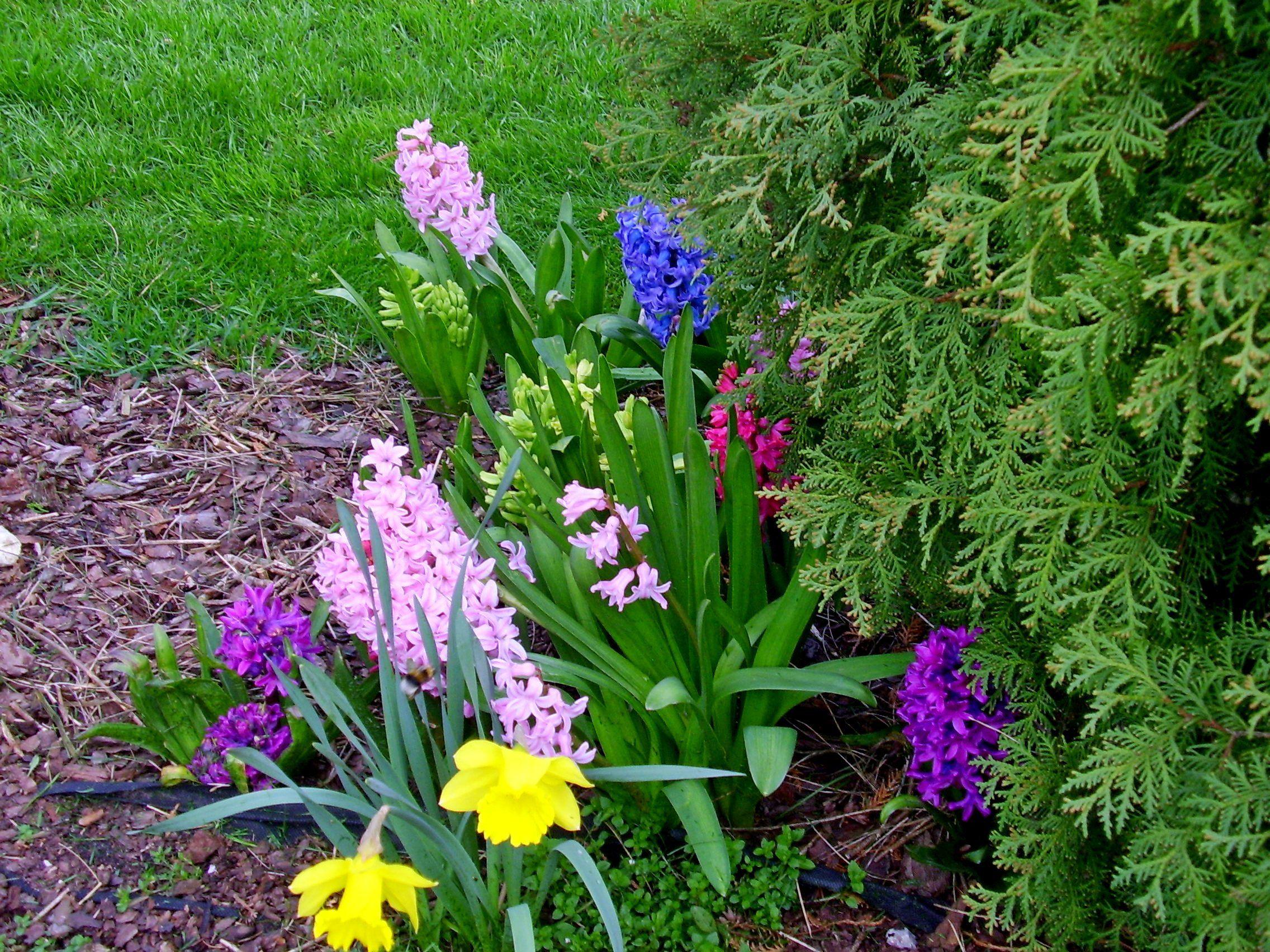 Wiosna W Ogrodzie Ogrody Przydomowe Kielce Plants Spring