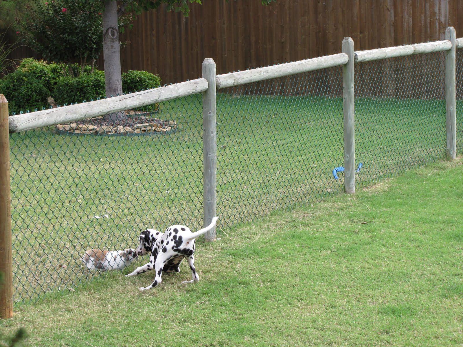 cheap dog fence ideas