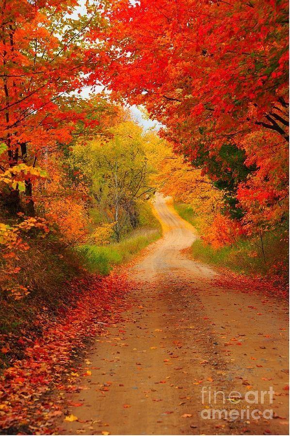 Una carretera en otoño