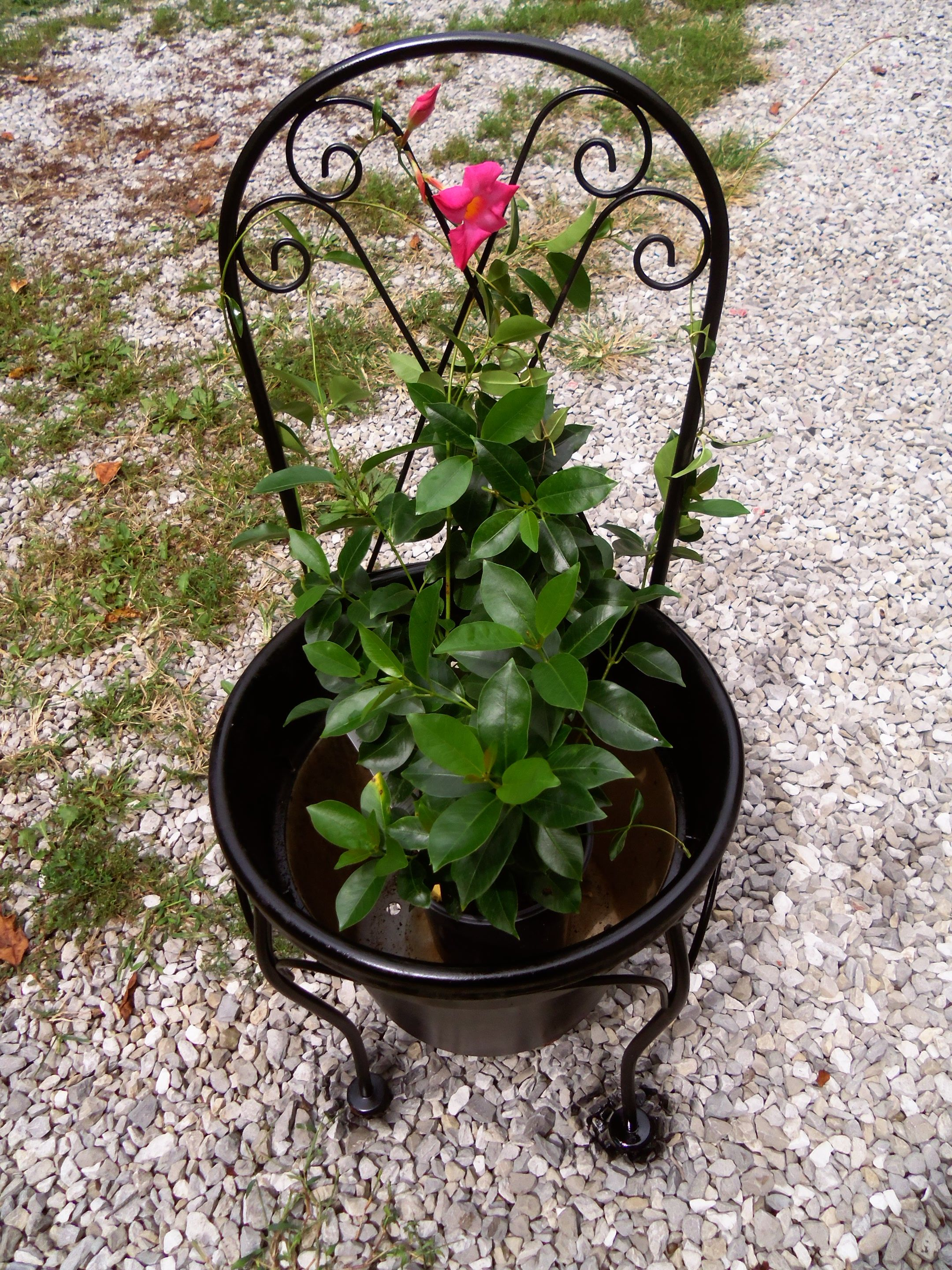 Old Metal Chair With No Seat, Old Flower Pot With