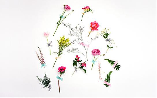 flower white colors blog design inspiration