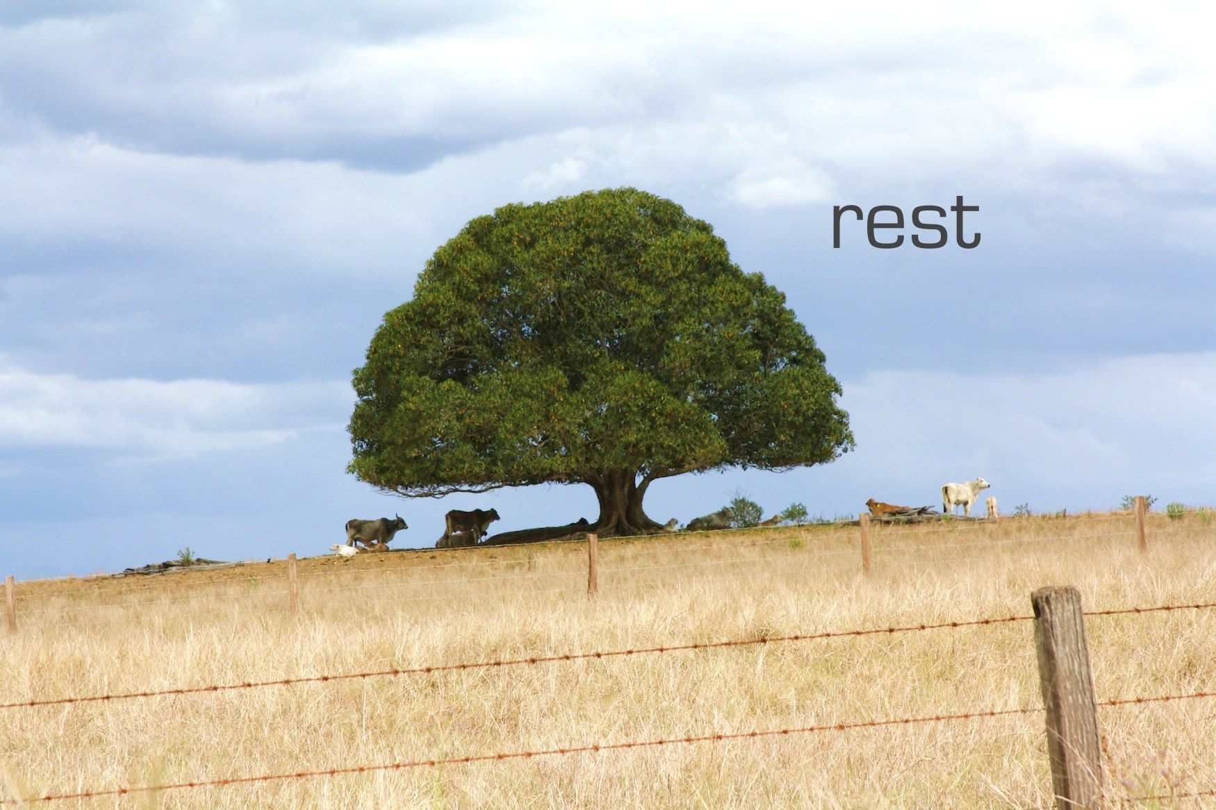 REST: by YES Psychology & Consulting. photo taken by Kash Thomson. www.yespsychology.com.au