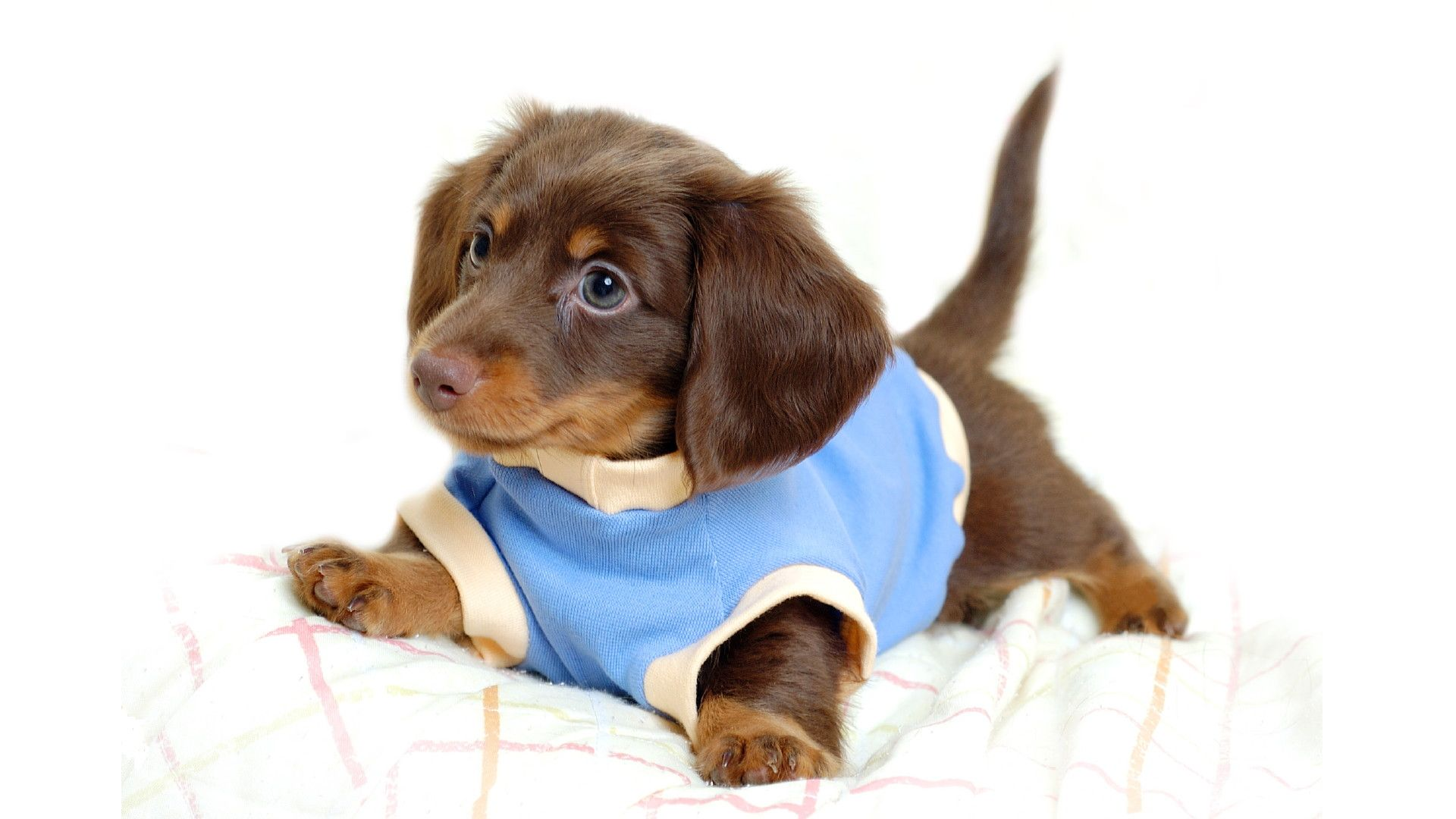 Cute Animal Wallpaper Animal Wallpapers Wholles Cute Dogs