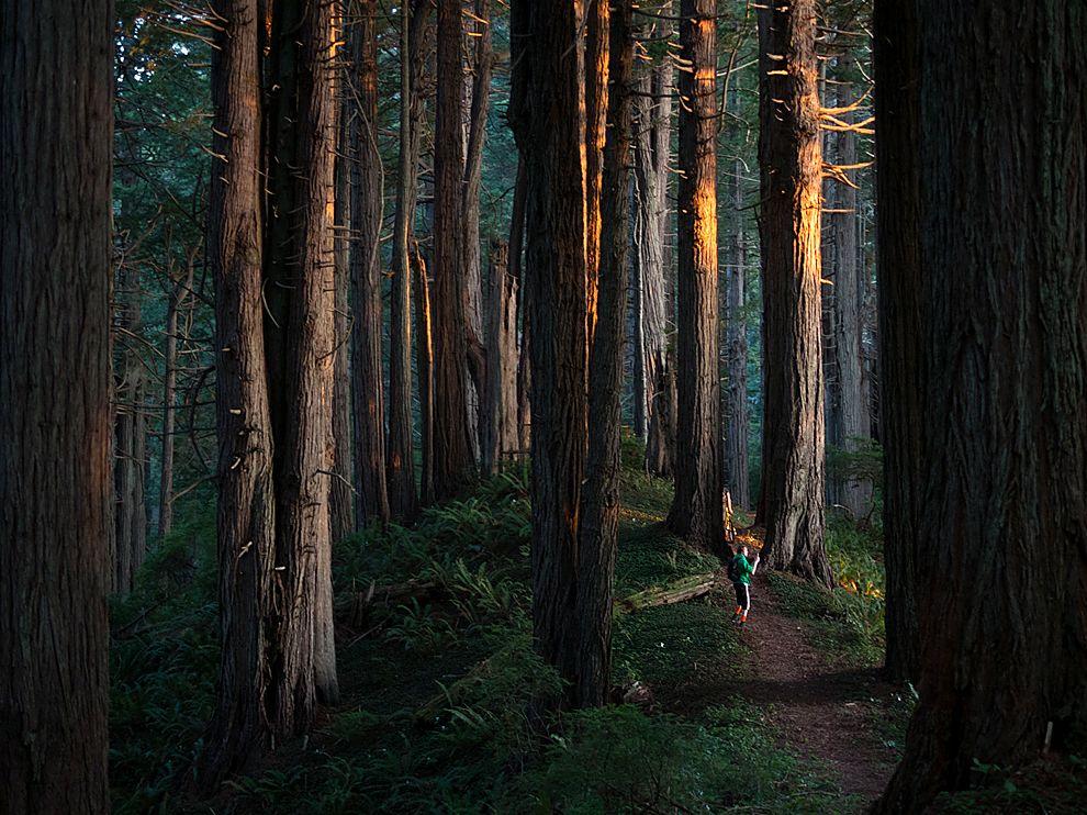 Redwood national park california travel 365 national forest sunset in redwood national forest california may 14 2013 sciox Choice Image