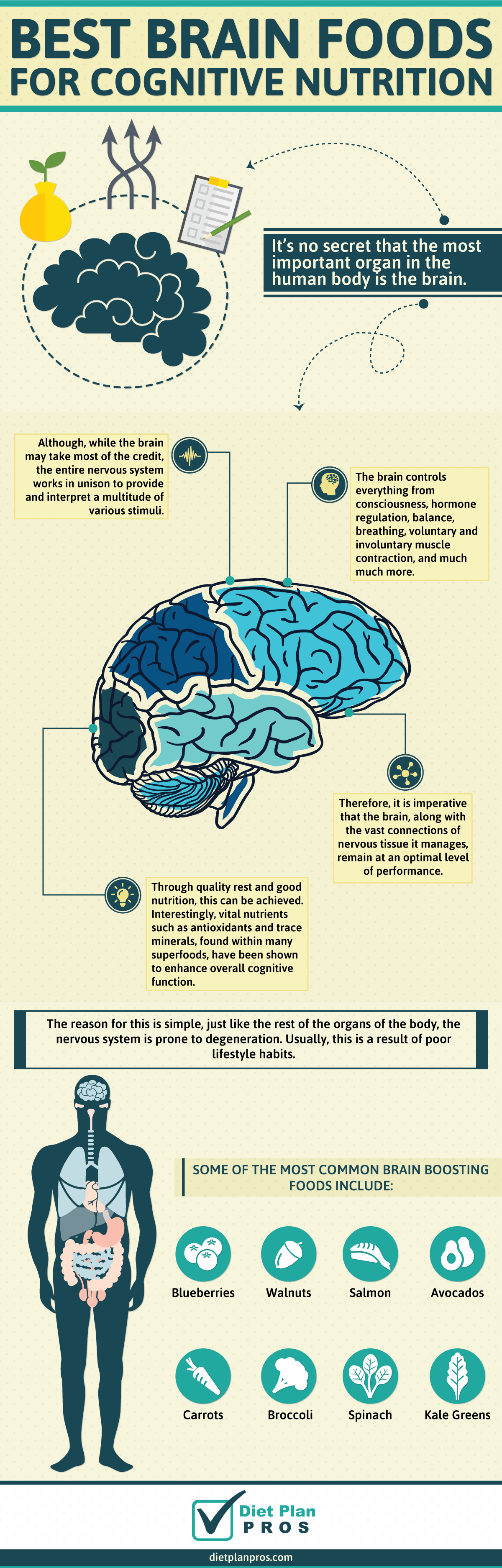 Best Brain Foods for Health and Better Cognitive Function   Health ...