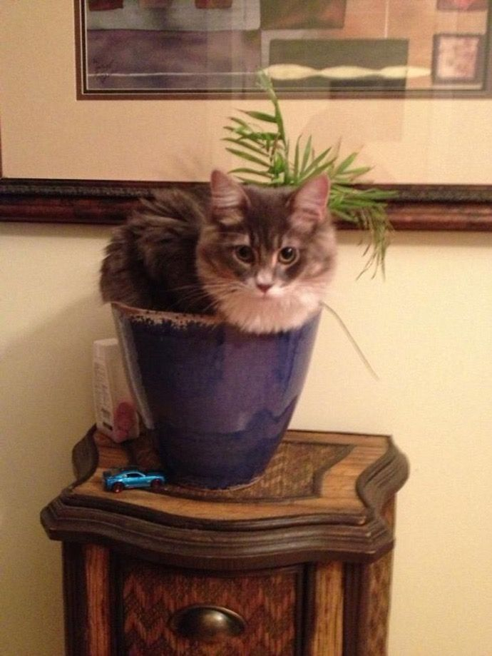 16. Ah, the domestic house plant cat.