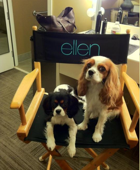 #lexi & #harley at the Ellen show!! ♥