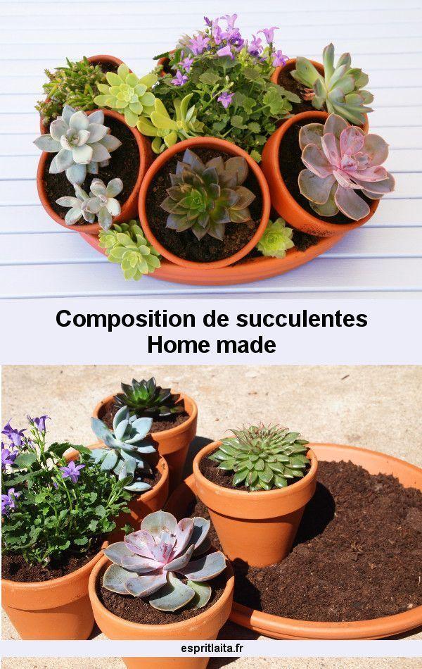 composition de succulentes et plantes grasses cactus succulentes et plantes grasses. Black Bedroom Furniture Sets. Home Design Ideas