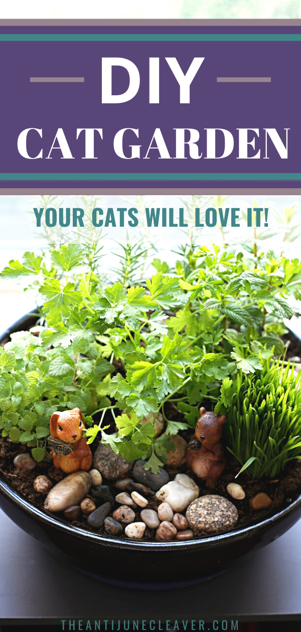 Cats love to chew on plants and flowers but many of them are toxic. Now you can give them their own safe DIY indoor cat garden to chew on. Your cats will love it! #catgarden #cats #catdiy #petdiy #catplants #safecatplants #theantijunecleaver @reganajc