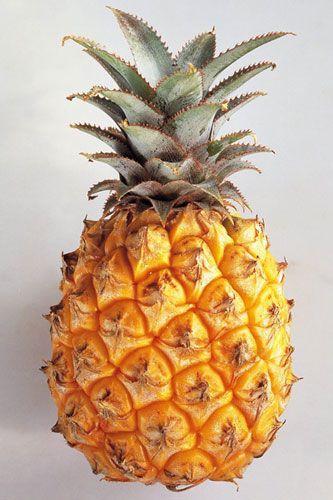 The Pineapple And Fibonacci Fruit Pineapple Pineapple Fruit