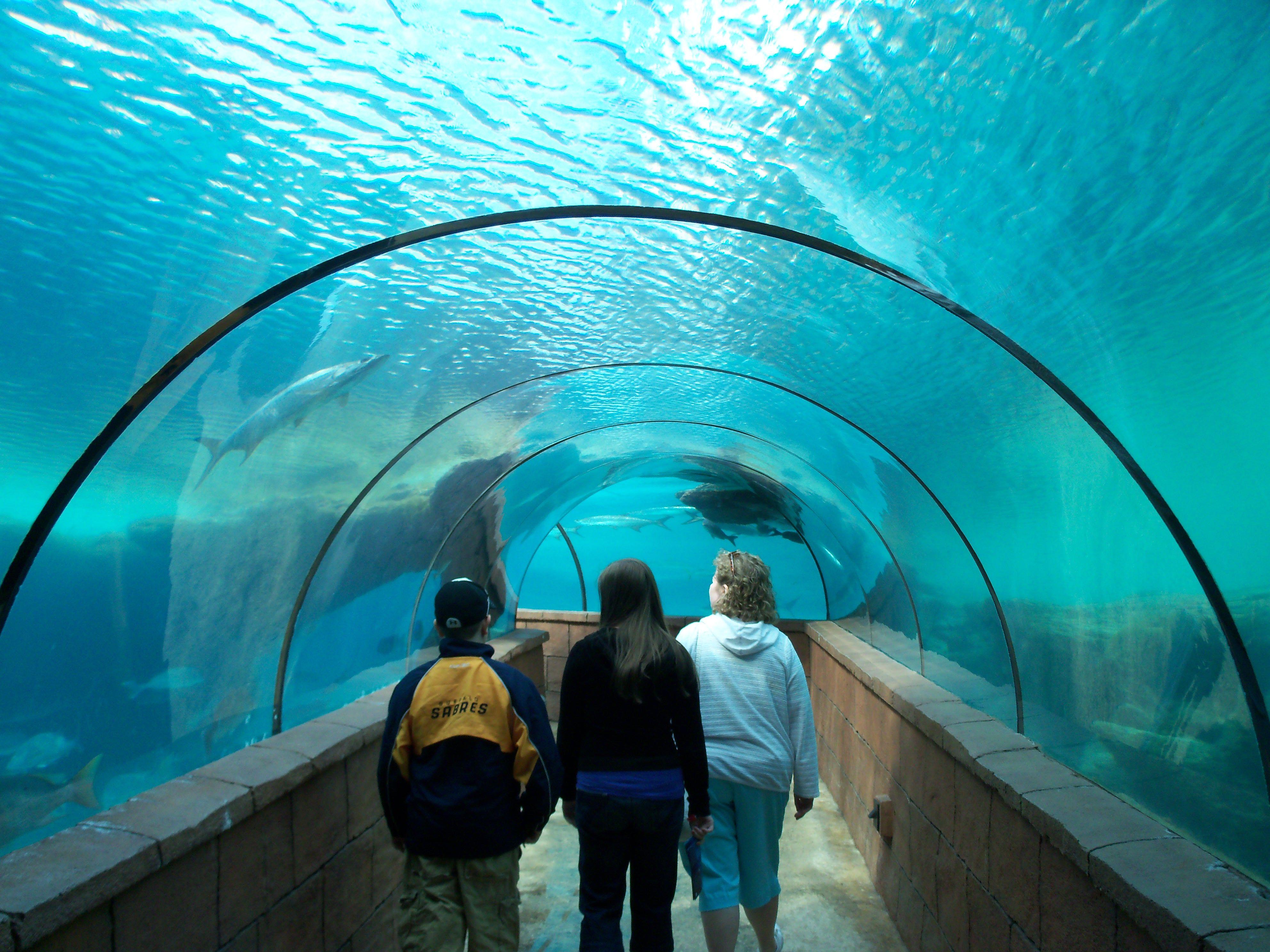 Atlantis Aquarium Bahamas Imagine Manta Rays And Sharks