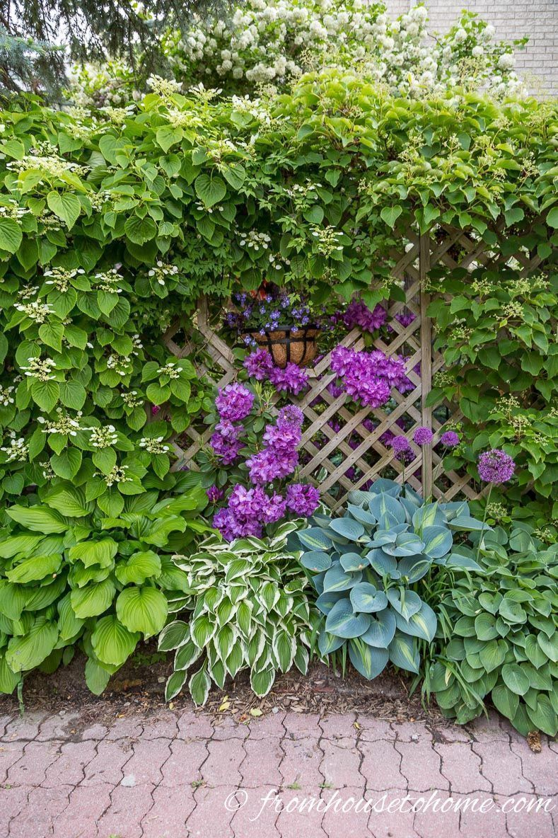 If You Are Looking For Plants That Grow In Shade This List Will
