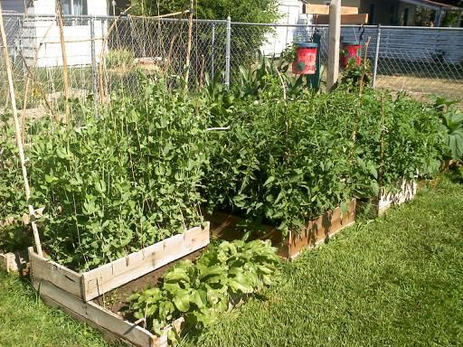 Our New Garden Project | Garden projects, Gardens and Plants