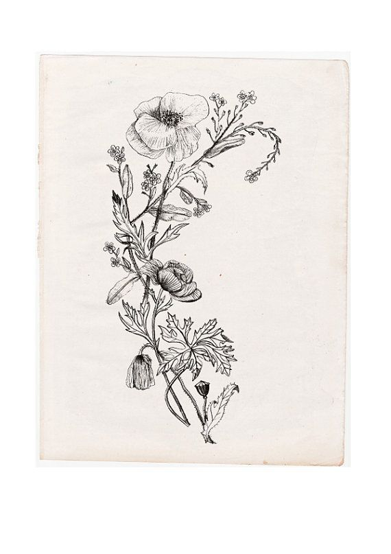 Black And White Wildflower Tattoo Google Search With Images
