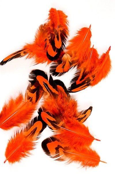 Faisan vénéré - 3-10 cm - orange - Plumes.fr